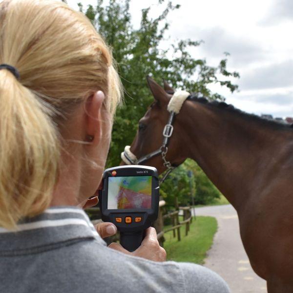 Thermografische Aufnahmen eines Pferdes