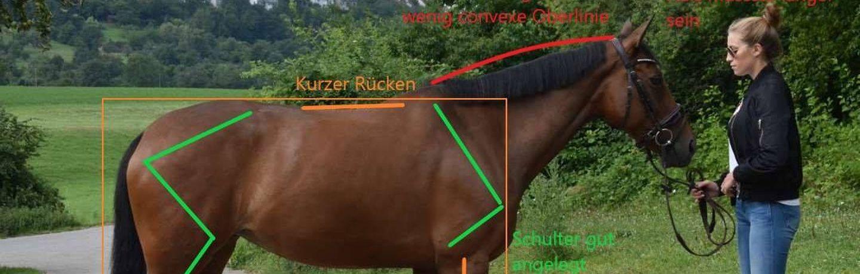 Lehrgänge rund ums Pferd