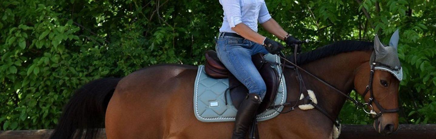 Beritt und Doppellongentraining mit Ausbildungspferden