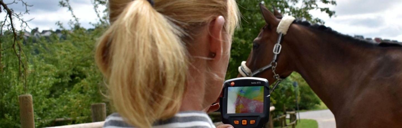 Thermografische Darstellung Pferd